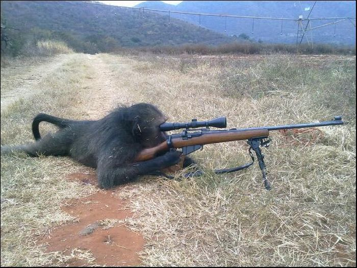 Funny photos of animals with guns