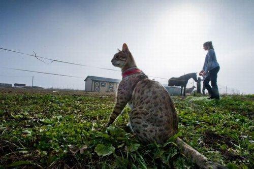 Trouble самый длинный в мире кот