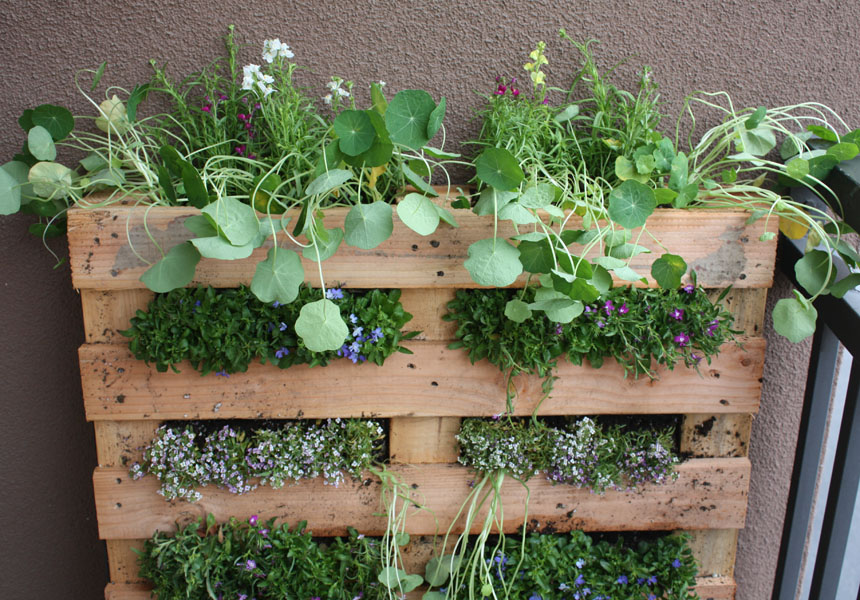 34 best images of ideas for small balcony herb garden - apar.
