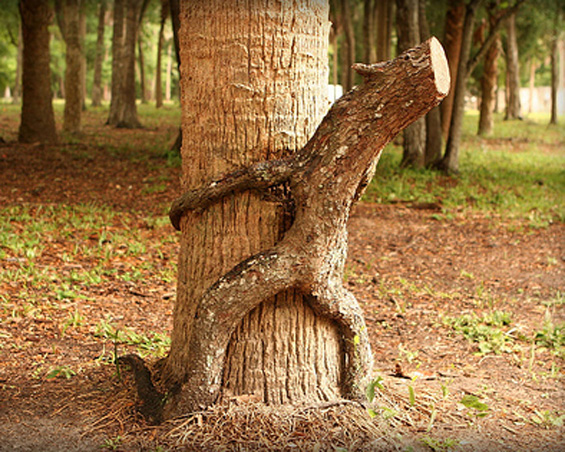 Секс с деревом