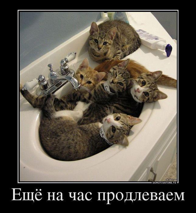 Смешные котики: лучшие изображения (150)   Милые котики, Смешные ...   700x645