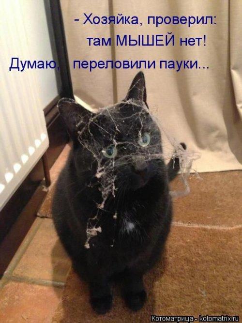 Новая котоматрица за неделю (23 фото)