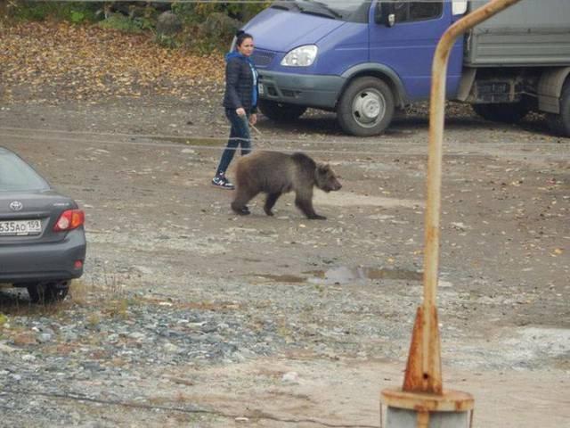 Российская жизнь в прикольных картинках (21 фото)