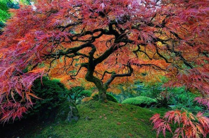 Самые необычные и красивые деревья (15 фото)