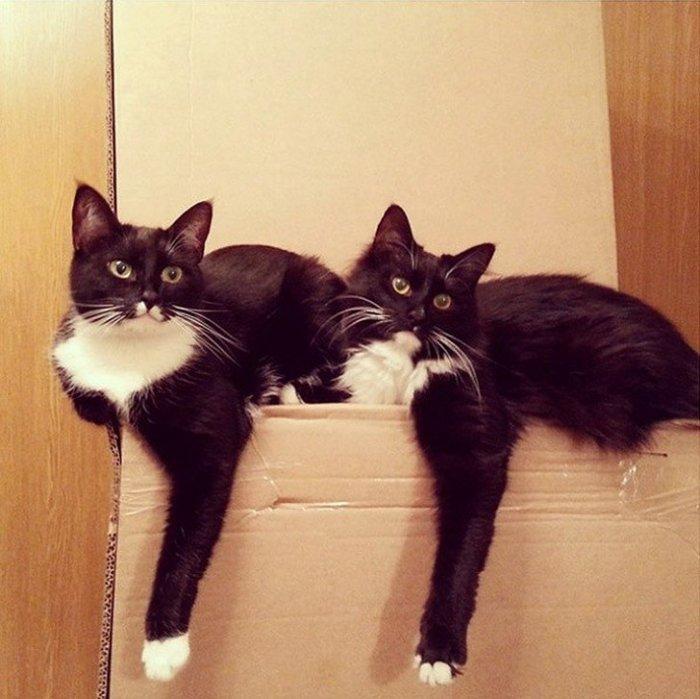Кошачья сборная по синхронному очарованию (20 фото)
